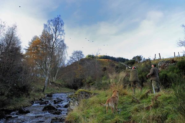 A Photograph of a shoot at Edradynate -Shooting Holidays in Scotland - Edradynate Estate, Luxury Country House and Sporting Estate , Perthshire
