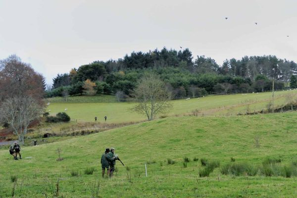 A colour photograph of a pheasant shoot at Edradynate EstateShooting Holidays in Scotland - Edradynate Estate, Luxury Country House and Sporting Estate , Perthshire