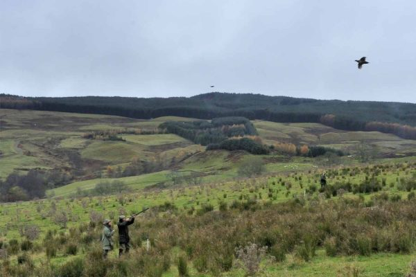 A colour photograph of a pheasant shoot at Edradynate Estate - Shooting Holidays in Scotland - Edradynate Estate, Luxury Country House and Sporting Estate , Perthshire